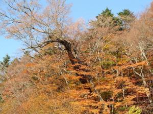 秋葉山紅葉