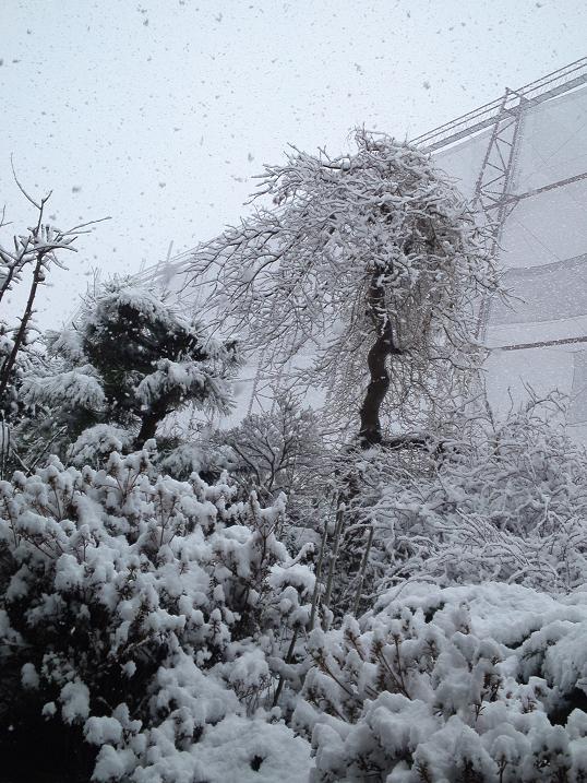 H24.3月大雪