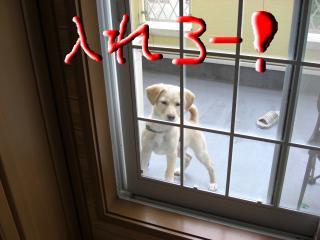 snap_kiki321_200940153429.jpg