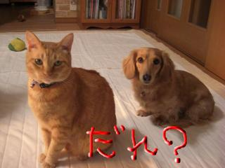 snap_kiki321_20094015945.jpg