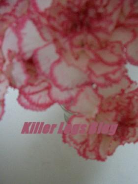 killer2347.jpg