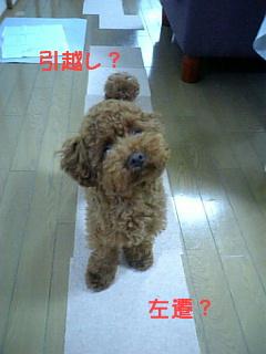 引越しDVC00137