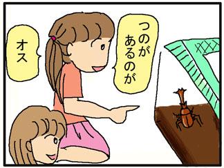 カブトムシの説明01