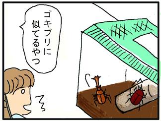 カブトムシの説明04
