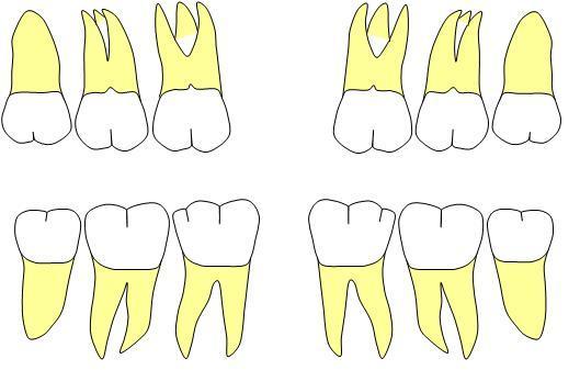 molar0423.jpg