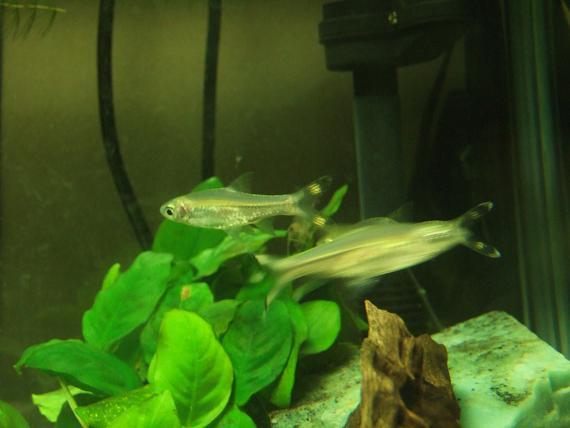 アクティブ熱帯魚