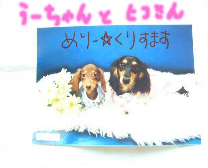 convert_20081228173348.jpg