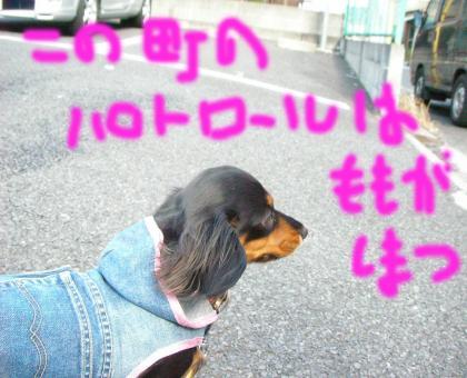 tye2_convert_20090316203300.jpg