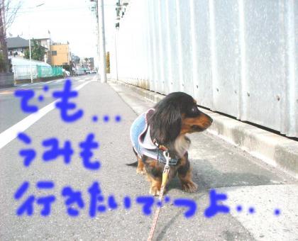 tye3_convert_20090316203339.jpg