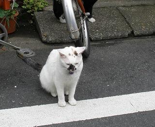 naganeko