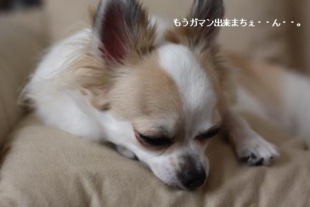 IMG_2164・2 コピー