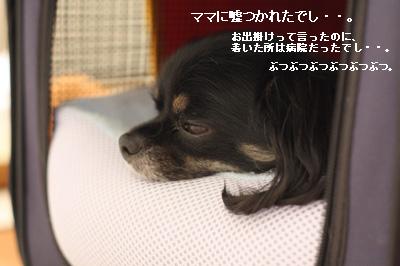IMG_3495・2 コピー