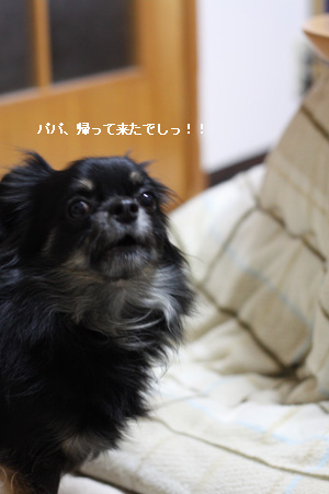 IMG_3926・2 コピー