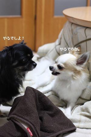 IMG_3950・2 コピー