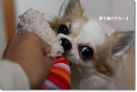 IMG_4464・2 コピー
