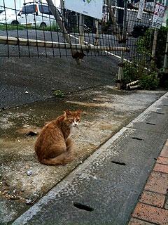 okinawa3_20100601235323.jpg