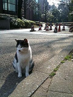 uenoneko1.jpg