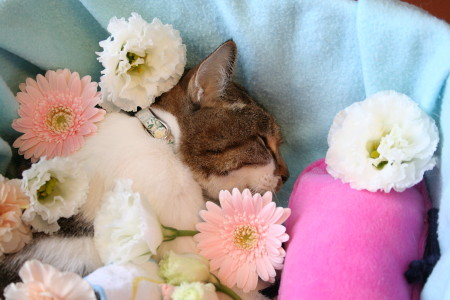 眠るキウイ