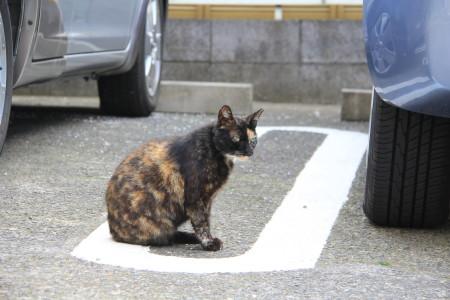 猫だまりa