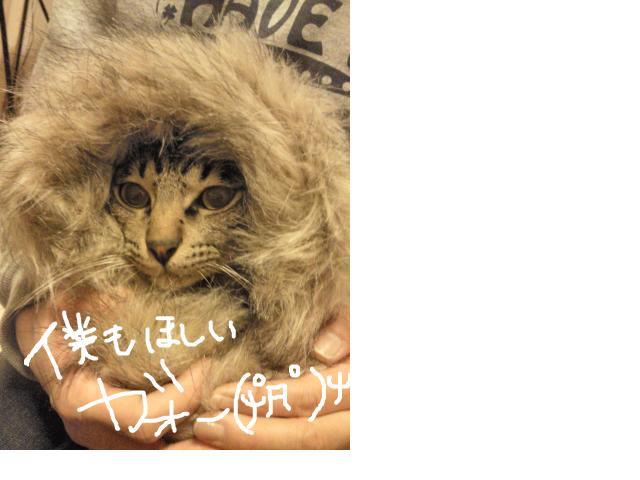 snap_kizikuro_201122141931.jpg