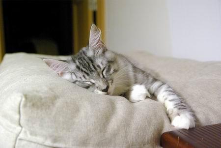 ガガたん、お疲れ。