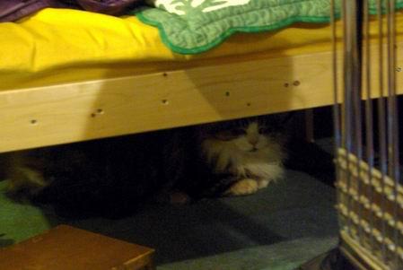 密かに椅子の下で寛ぐレオさん
