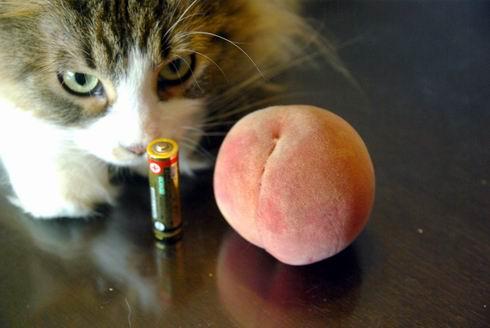 Peach with シナモン