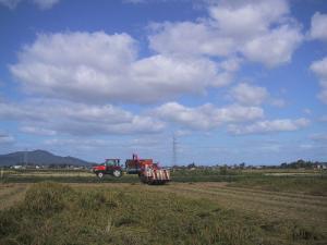 2008 稲刈り