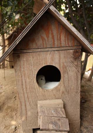ユキミ小屋