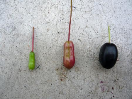 種色移り変わり