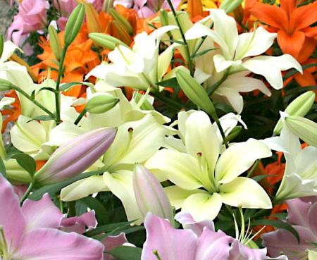 yuritenji001_20090427163113.jpg