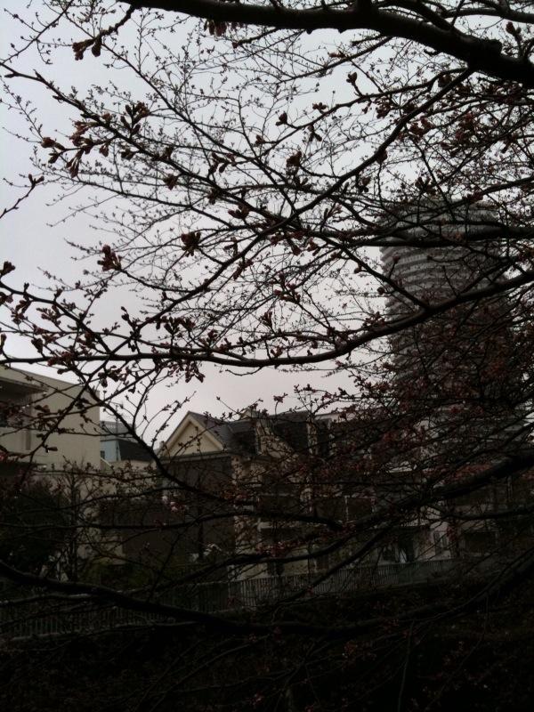 20100325神田川
