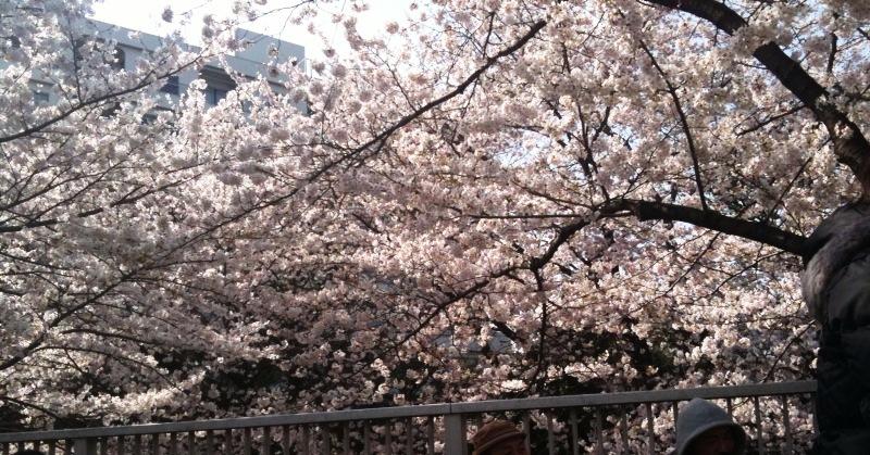 20100403花見:桜
