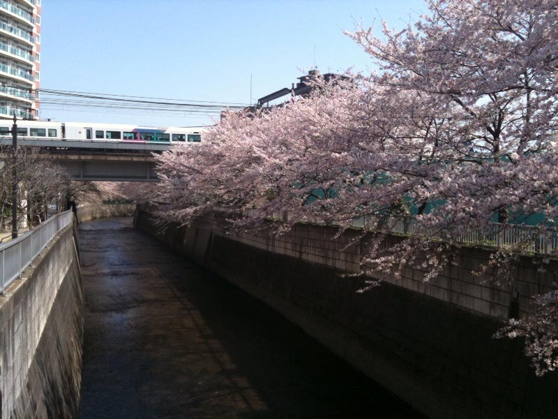 20100408桜線路