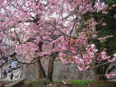 09・2桜 065