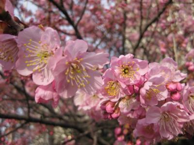 09・2桜 102