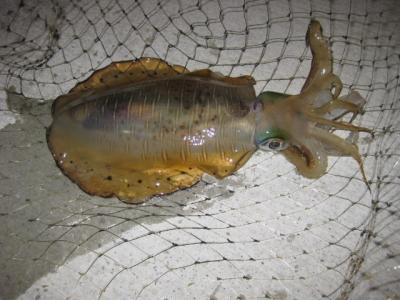 宇和島の釣り 060