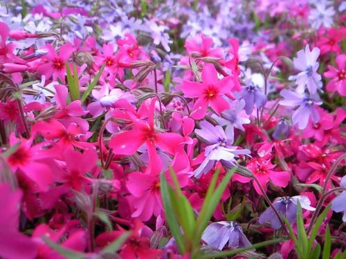 何て名前の花? 1