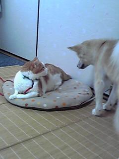 3-2.猫パンチ前..