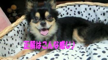 笑む犬鯉太1