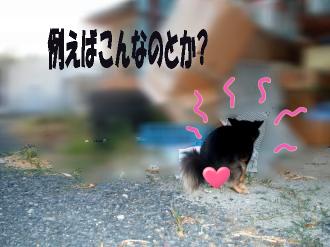 笑む犬鯉太2