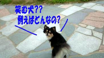 笑む犬鯉太3