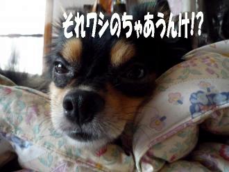 笑む犬鯉太4