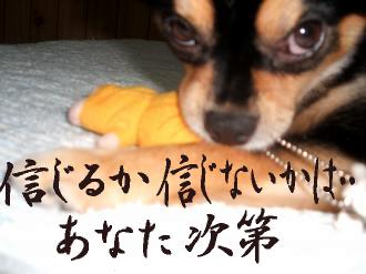 ねずみ鯉4