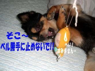 ねずみ鯉5
