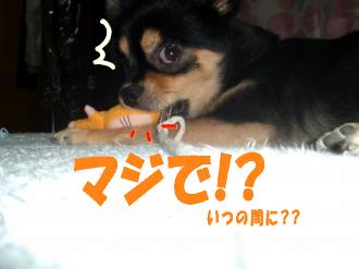 ねずみ鯉3