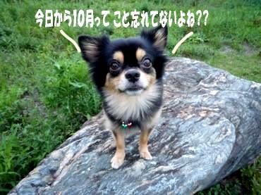 TBS鯉3