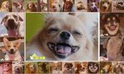 笑む犬グランプリ入賞!