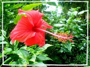 flowerrr.jpg