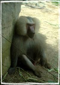 monkeyko.jpg